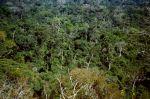 Amazonien Regenwald Brasilien