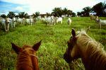 Fazenda in Mato Grosso